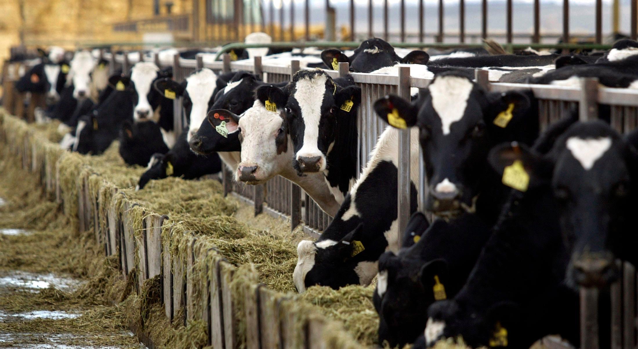 Come la nostra produzione alimentare, non solo la carne, sta distruggendo il pianeta
